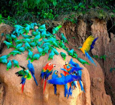 Lima-Tambopata Amazon-Cusco-Machupicchu 10D/9N